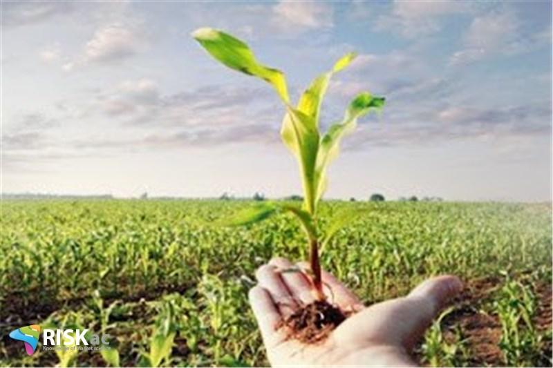 ریسک بخش کشاورزی رو به کاهش است