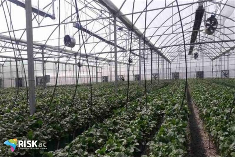 وضعیت اقتصاد در بخش گازی کشاورزی، برندی